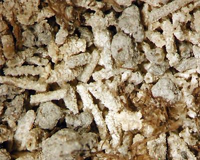 کربنات کلسیم کریستال